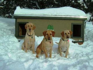 Buck, Oakley, & Annie - Colorado