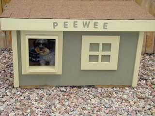 Pee Wee - Colorado